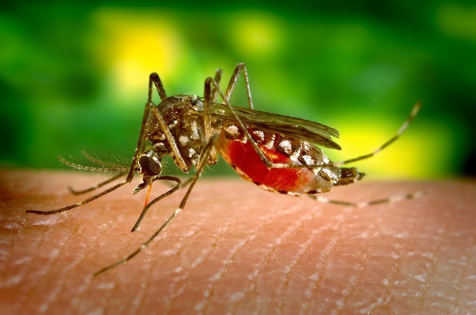 Sesapi confirma aumento de 138,9% em notificações de casos de Dengue no Piauí