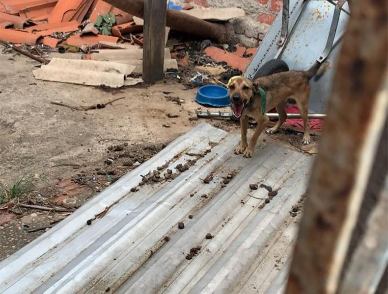 Carrinho de mão era a única proteção que o animal tinha para se proteger do sol e da chuva (Foto: Divulgação DPMA)