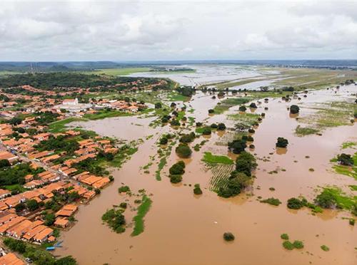 Plantações de arroz são destruídas pelas cheias em Miguel Alves PI