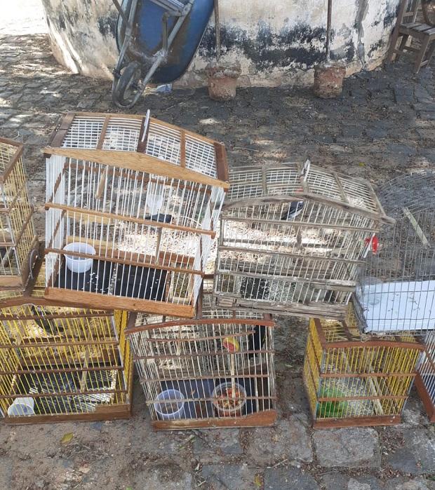 Cerca de 300 aves silvestres são apreendidas no Piauí