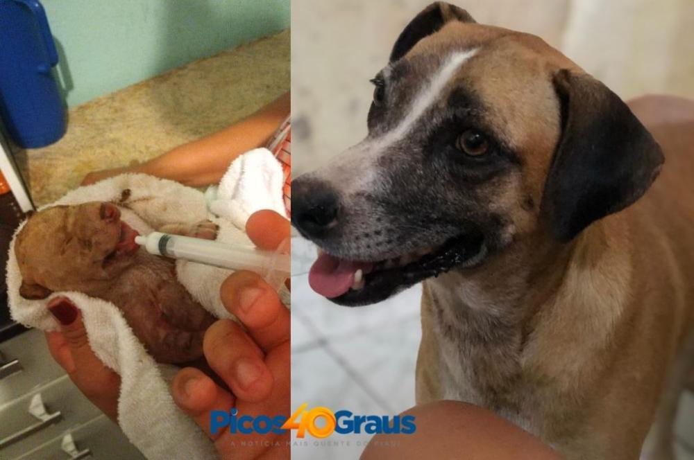 Filhotes de cães são queimados vivos e população se comove