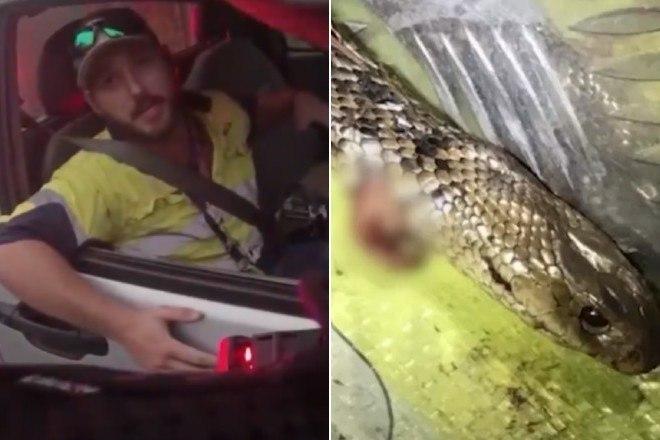 Motorista luta contra cobra venenosa dentro de carro a 123 km/h; fotos