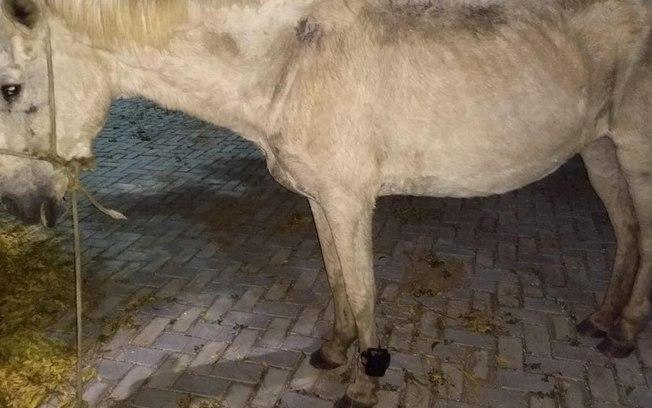Cavalo é encontrado com tornozeleira eletrônica