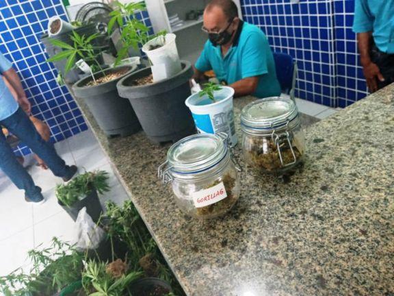 Assistente social é preso com plantação de maconha na própria residência