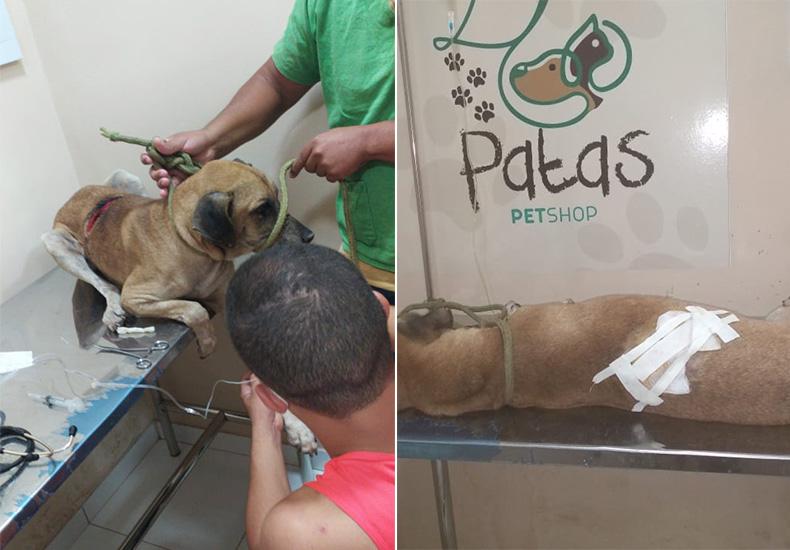 Piauí registra primeira prisão por maus-tratos animais; cão pegou 60 pontos