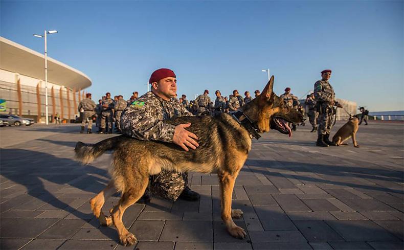 Morre cão da Polícia Militar do Piauí que atuou nas Olimpíadas e em rebeliões