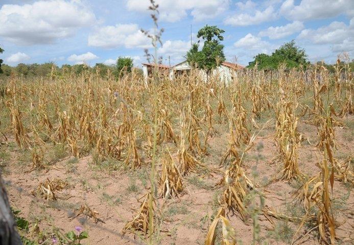 Chega a 49 o número de municípios em situação de emergência no Piauí por conta da seca