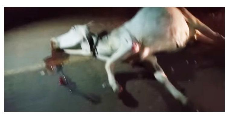 Jovem fica ferido após colidir com animal na PI – 214