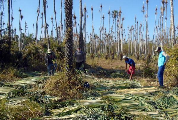Piauí tem seis empresas na Lista Suja do Trabalho Escravo; uma está em Barras