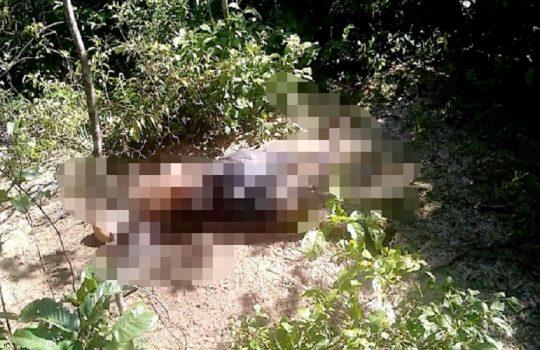 Corpo de idoso é encontrado morto a facadas em José de Freitas PI