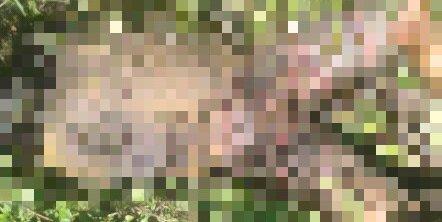 Corpo de homem degolado é encontrado em matagal no PI