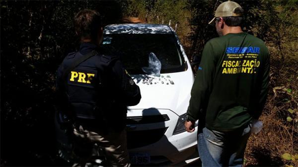 Operação apreende esmeraldas em garimpo clandestino no Sul do Piauí