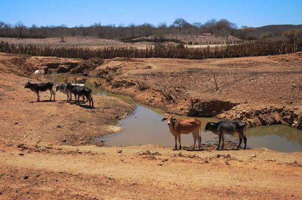 Sobe para 48 os municípios em situação de emergência por seca no Piauí