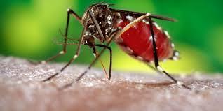 Piauí tem 65 municípios em alerta para surto de dengue