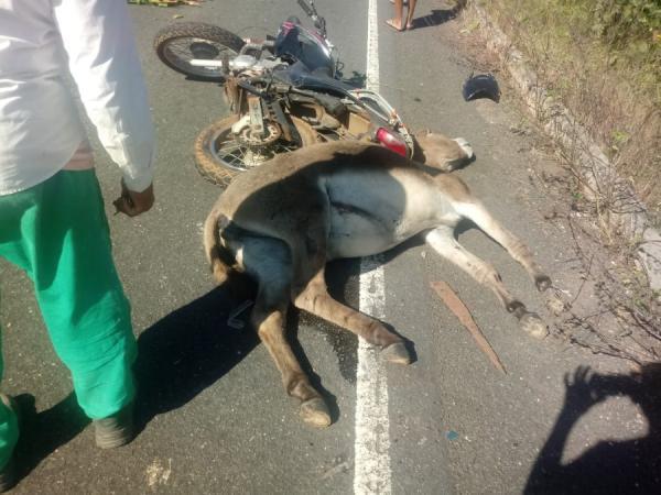 Motociclista colide em animal na PI 113 e sofre ferimentos
