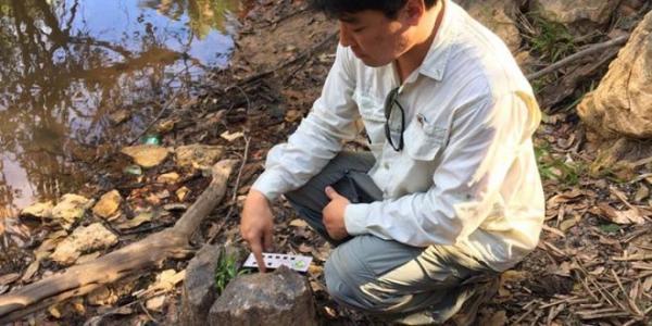Nova Floresta Fóssil é descoberta as margens de riacho no Piauí