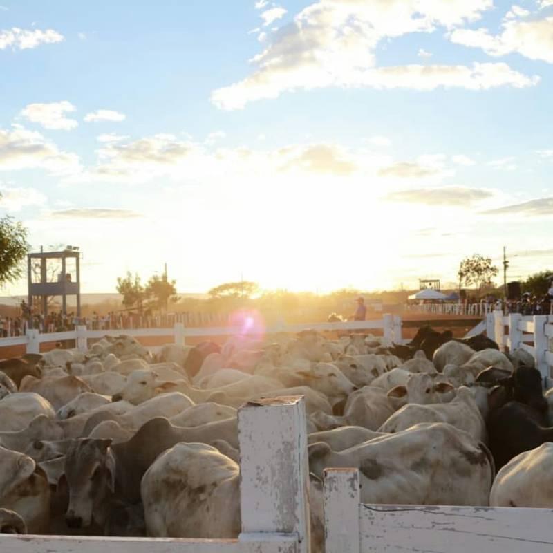 ExpoCorrente se consagra como a maior feira agropecuária do interior do Piauí