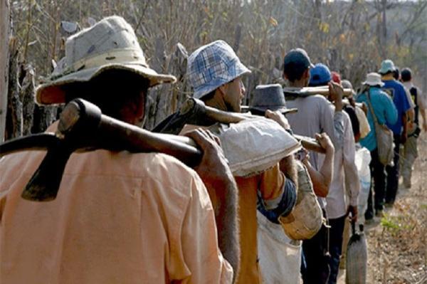 MPF obtém condenação de empresário por trabalho escravo em Porto Alegre do Piauí (PI)