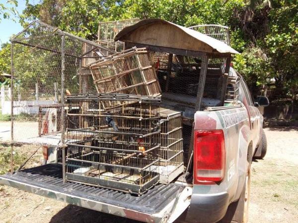 Ação da PM Ambiental apreende aves silvestres e constata aterro irregular