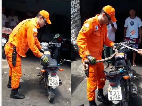 Jiboia é encontrada embaixo de banco de moto no Piauí. Vídeo!