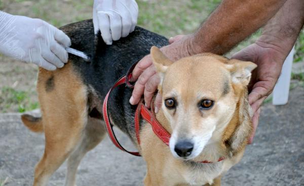 Barras: vacinação de cães e gatos contra Raiva começa nesta segunda-feira (11)